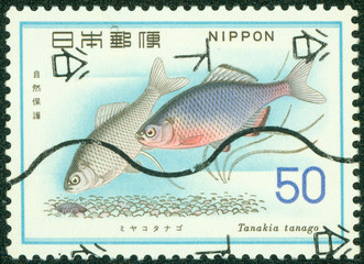 stamp printed in Japan shows Tanakia tanago