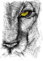 Foto op Plexiglas Hand getrokken schets van dieren Hand drawn Sketch of a lion looking intently at the camera