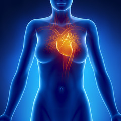 Woman glowing heart anatomy