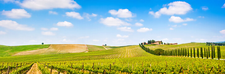Tuscany landscape panorama with vineyard, Chianti region, Italy