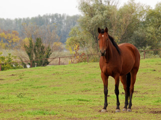 brown horse in pasture