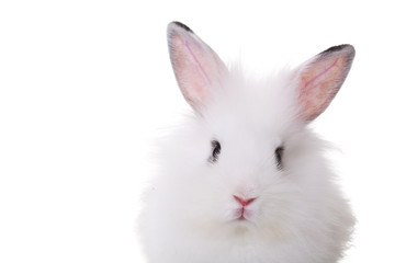 cute face of a small white rabbit