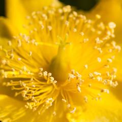 Bright Yellow Explosion