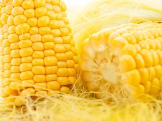An ear of corn macro