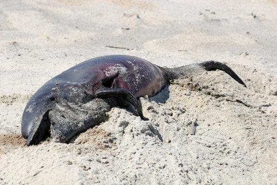 dolphin on beach