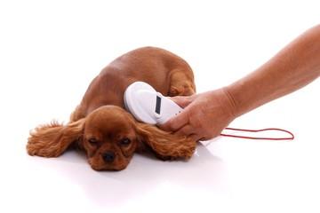 Tierchip Auslesen beim Hund