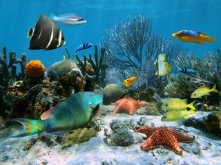 Foto op Canvas Onder water Coral reef with starfish and colorful tropical fish, Caribbean sea