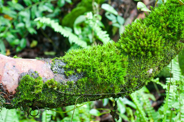 Wall Mural - Bright green moss on tree