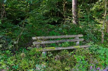 vermoderte Bank im Wald