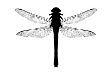 A silhouette of a dragonfly