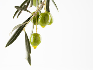 olive branch with olives and oil isolated on white