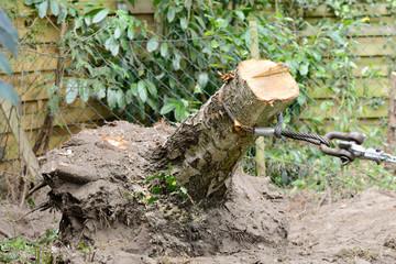 Baumstumpf herausziehen