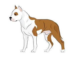 Illustrated Pit Bull