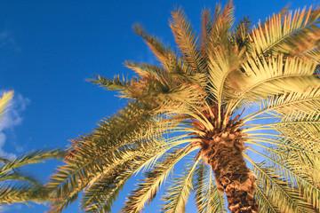 top of a palm tree lighting