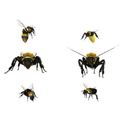 6 bees isolated on a white background