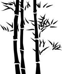 Silhouette of a branch of a bamboo