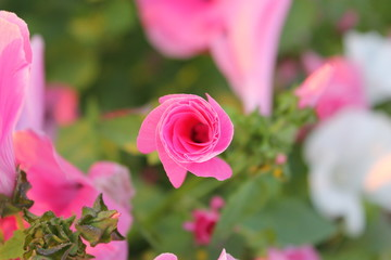 цветок на закате