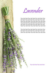 Fresh lavender hanging from a rope with copy space