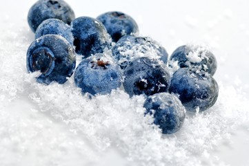 Blaubeeren Vaccinium myrtillus