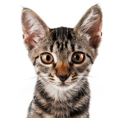 gray striped kitten with a clever grimace