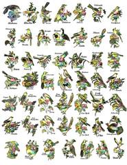 USA state bird collection icon symbol