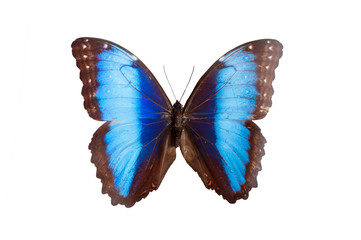 Morpho Rugitacniatus. Butterfly. Isolated on white background