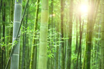 Bamboebos met ochtendzon