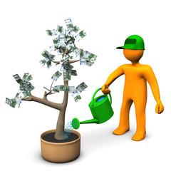 Euro Money Plant