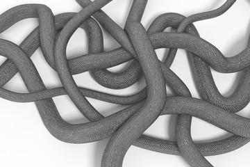 snake on a white background