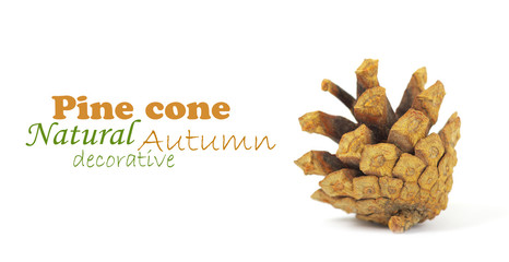 Pine cone isolated on white, clipping path included