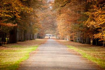 Autumn Forrestpath