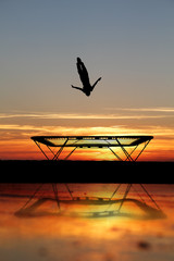 Wall Mural - silhouette of trampoline gymnast on beach