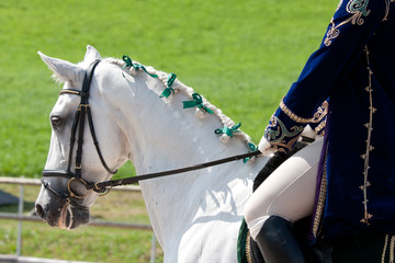 White Lusitano Horse at Barockpferdetag competition