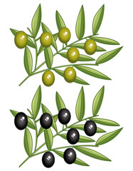 Black and green olives branches. Icons set.