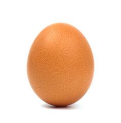Egg closeup isolated on white background