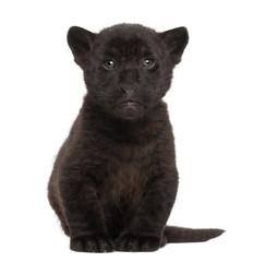 Jaguar cub, 2 months old, Panthera onca