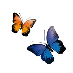Shiny blue and orange butterfly