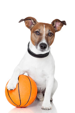 Basket ball  winner dog