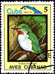 Todus Multicolor, from Series Cuban Birds