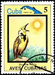 Sturnella Magna, from Series Cuban Birds