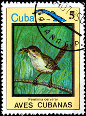 Ferminia Cerverai, from Series Cuban Birds