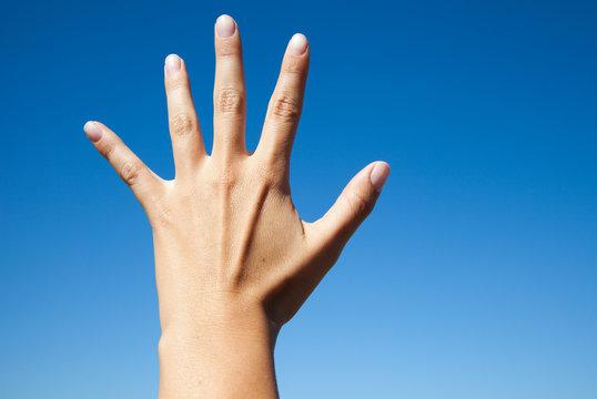Linke Hand I