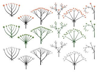 Set of vector different types of inflorescence.