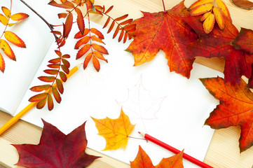 Fall leaves. Autumn leaves of maple