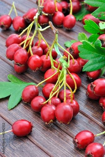 Bacche rosse di biancospino immagini e fotografie for Bacche rosse nomi