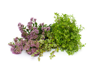 marjoram,oregano and thyme