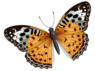 Vector some orange butterfly.