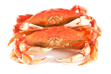 Pair of whole freshly cooked crabs on white