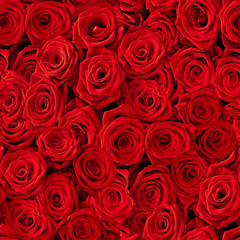 Seamless roses background