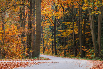 Autumn forest road in The Netherlands